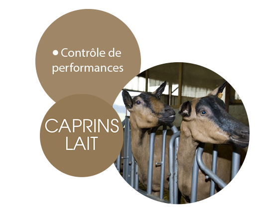 caprins-lait-mobile